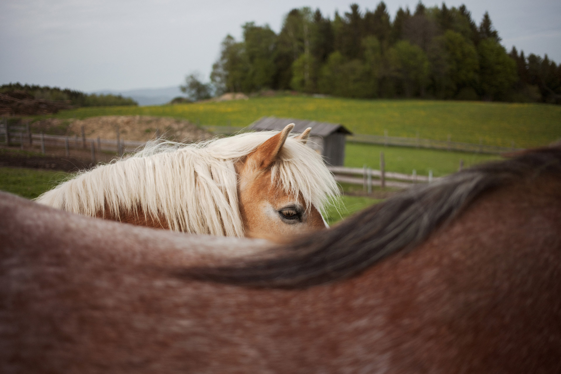 timo-stammberger-photography-fotografie-horses-cute-animals-nature-erdlingshof-mitgefuehl-vegan-compassion