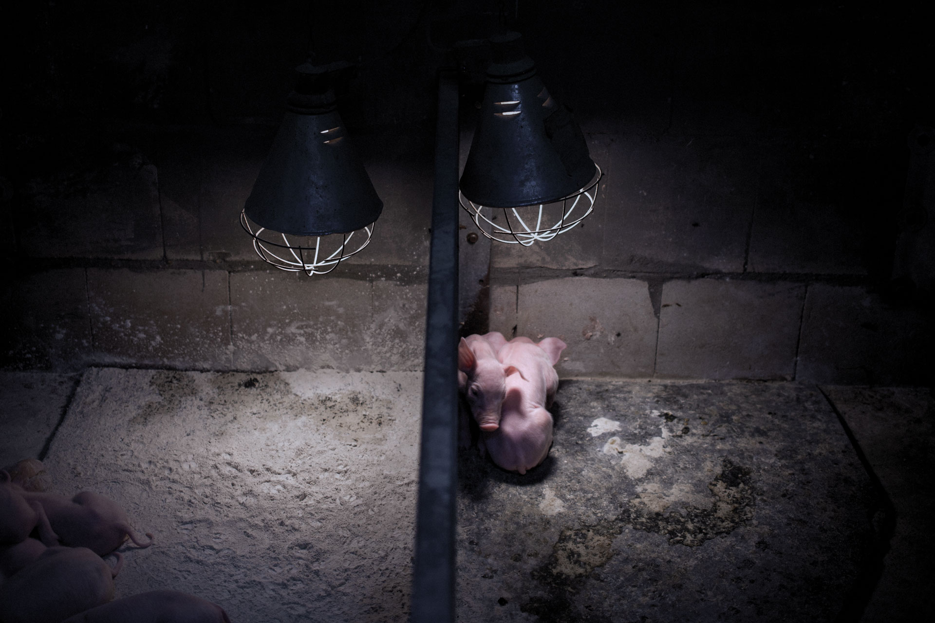 timo-stammberger-massentierhaltung-mastanlage-factory-farming-schweine-pigs-animal-rights_09