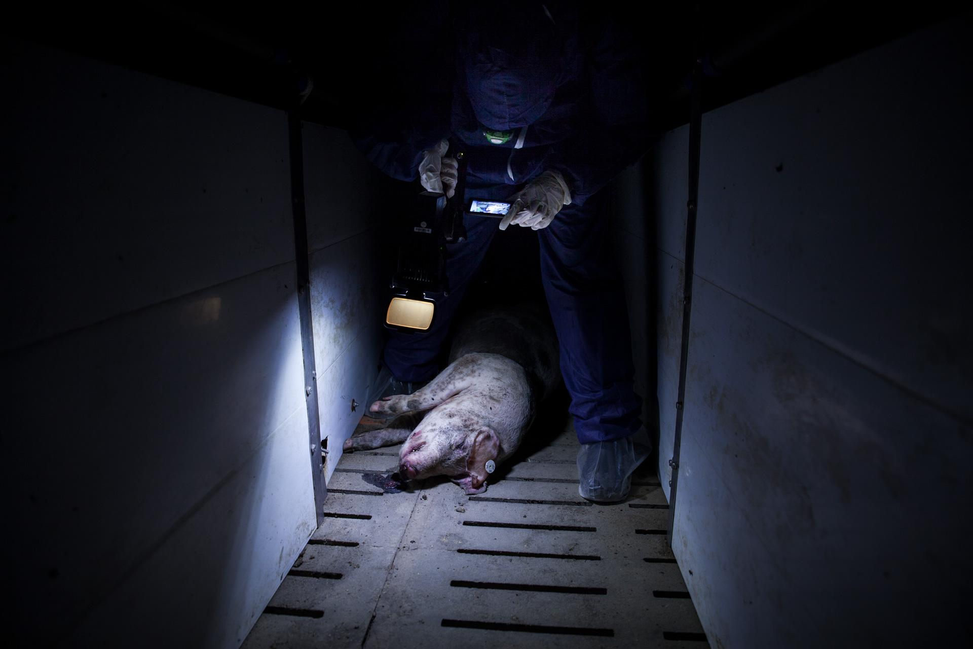 timo-stammberger-massentierhaltung-mastanlage-factory-farming-schweine-pigs-animal-rights_15