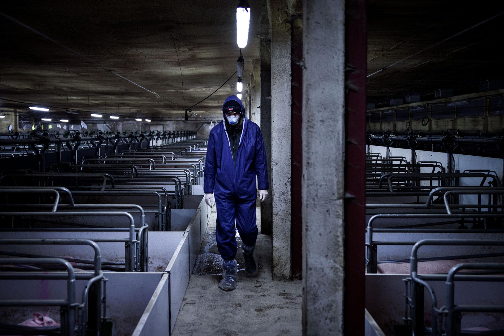 timo-stammberger-massentierhaltung-mastanlage-factory-farming-schweine-pigs-animal-rights_18