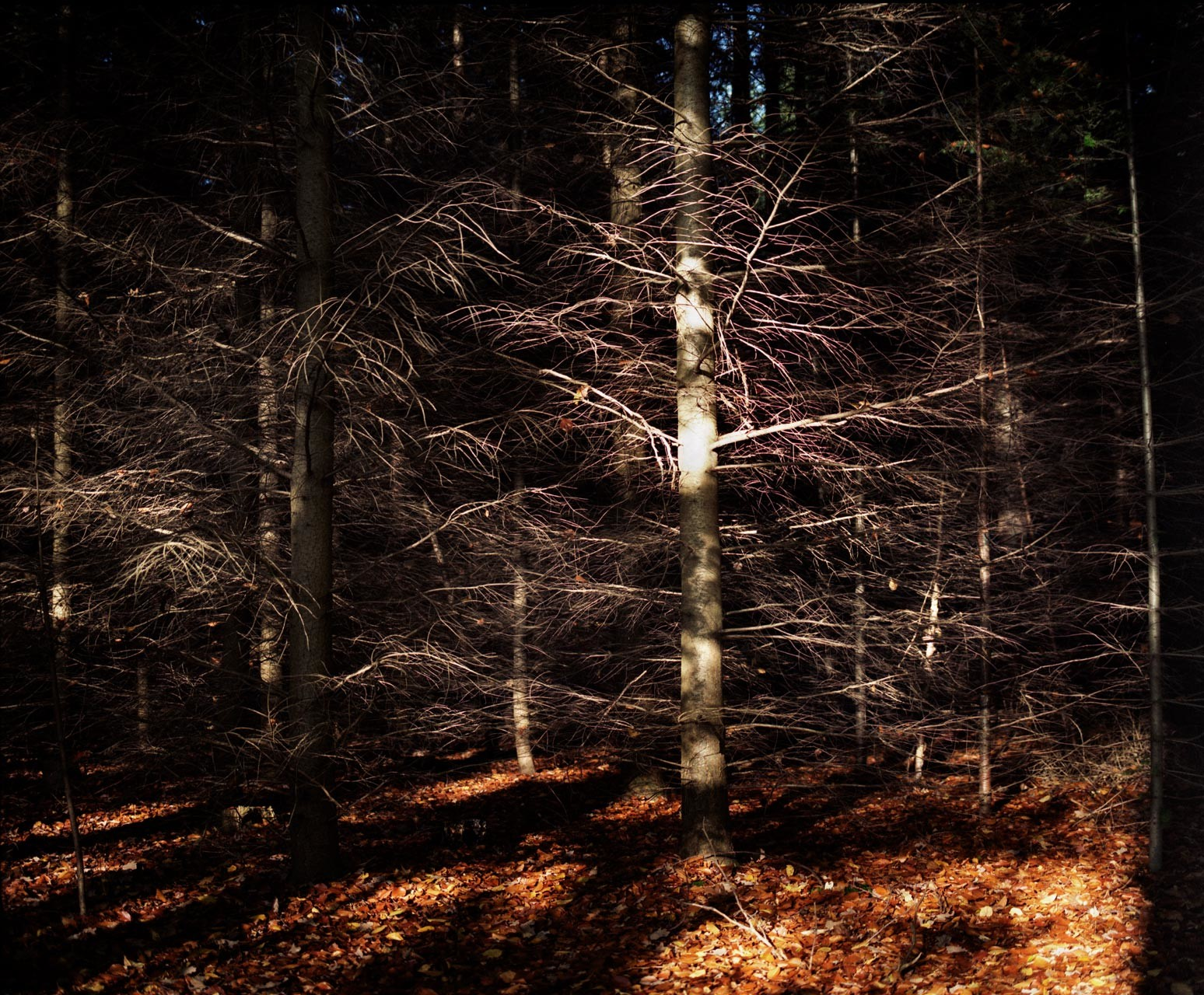 timo-stammberger-photography-forest-trees-sunny