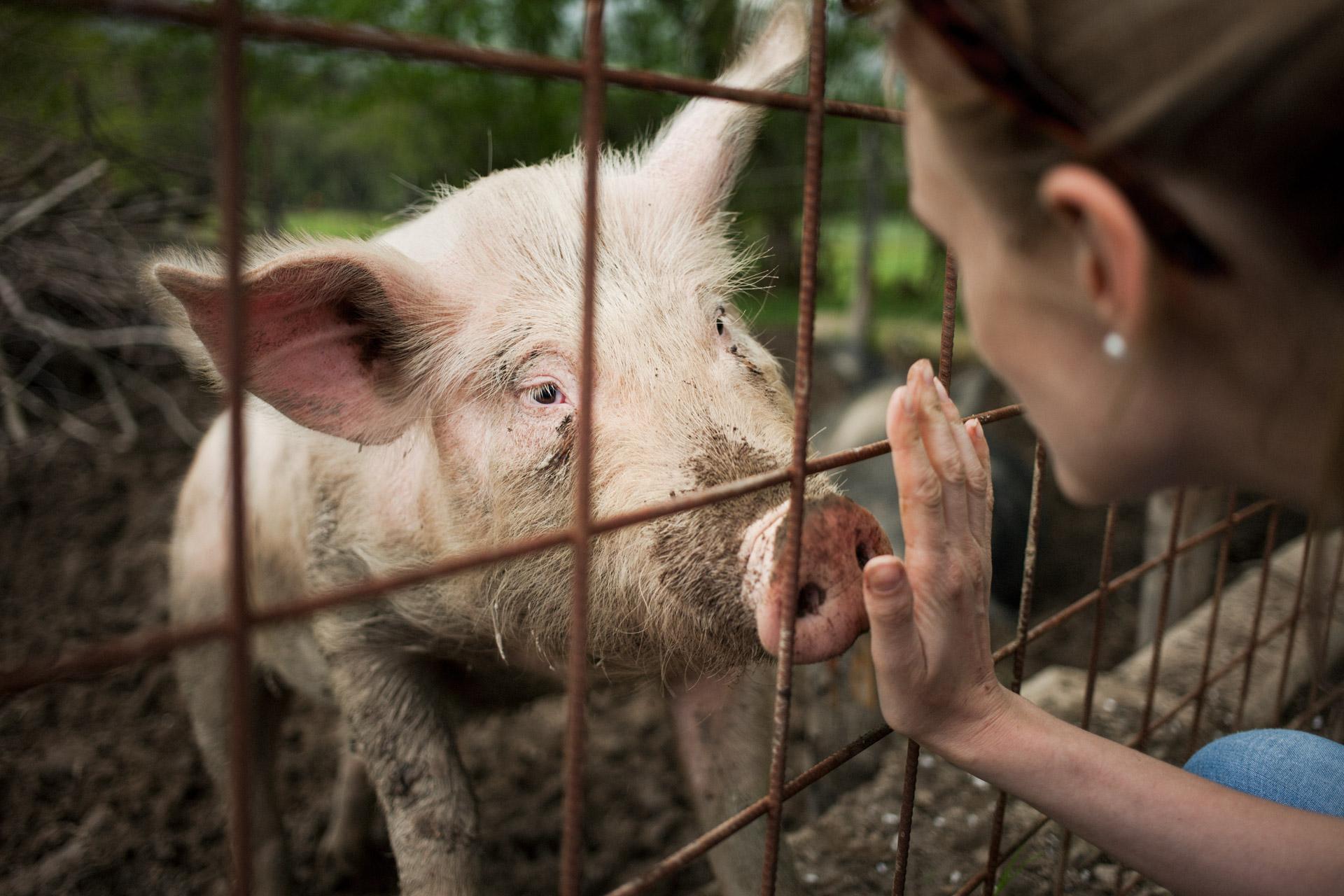 timo-stammberger-photography-fotografie-pig-cute-schwein-woman-erdlingshof-mitgefuehl-interaction-compassion