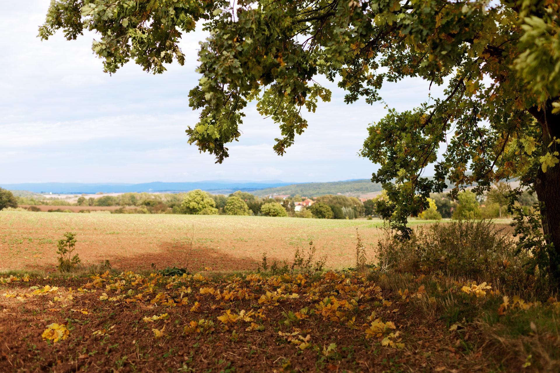 Timo_Stammberger_Duderstadt_Landscape_Forerest_Wald_Acker_Herbst_Sommer