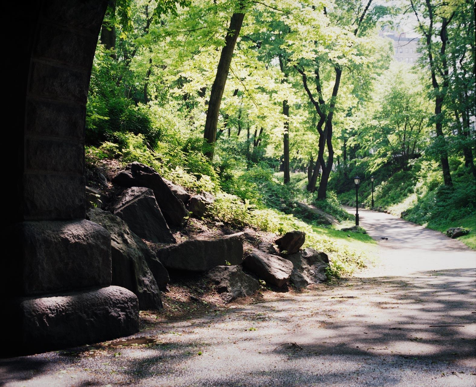 Timo_Stammberger_New_York_Manhattan_Central_Park_Trees_Summertime